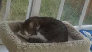 Sophie In Her Catstand
