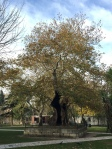 2015-11-25-fatih mosque tree1